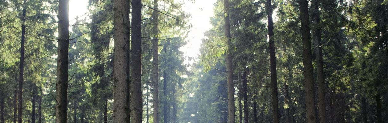 Tief durchatmen: Mit dem Dr. Hauschka Wind und Wetter Bad